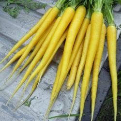 Zanahoria Violeta Dinkos Las zanahorias son uno de las verduras o vegetales más conocidas y consumidos en todo el mundo. zanahoria violeta dinkos