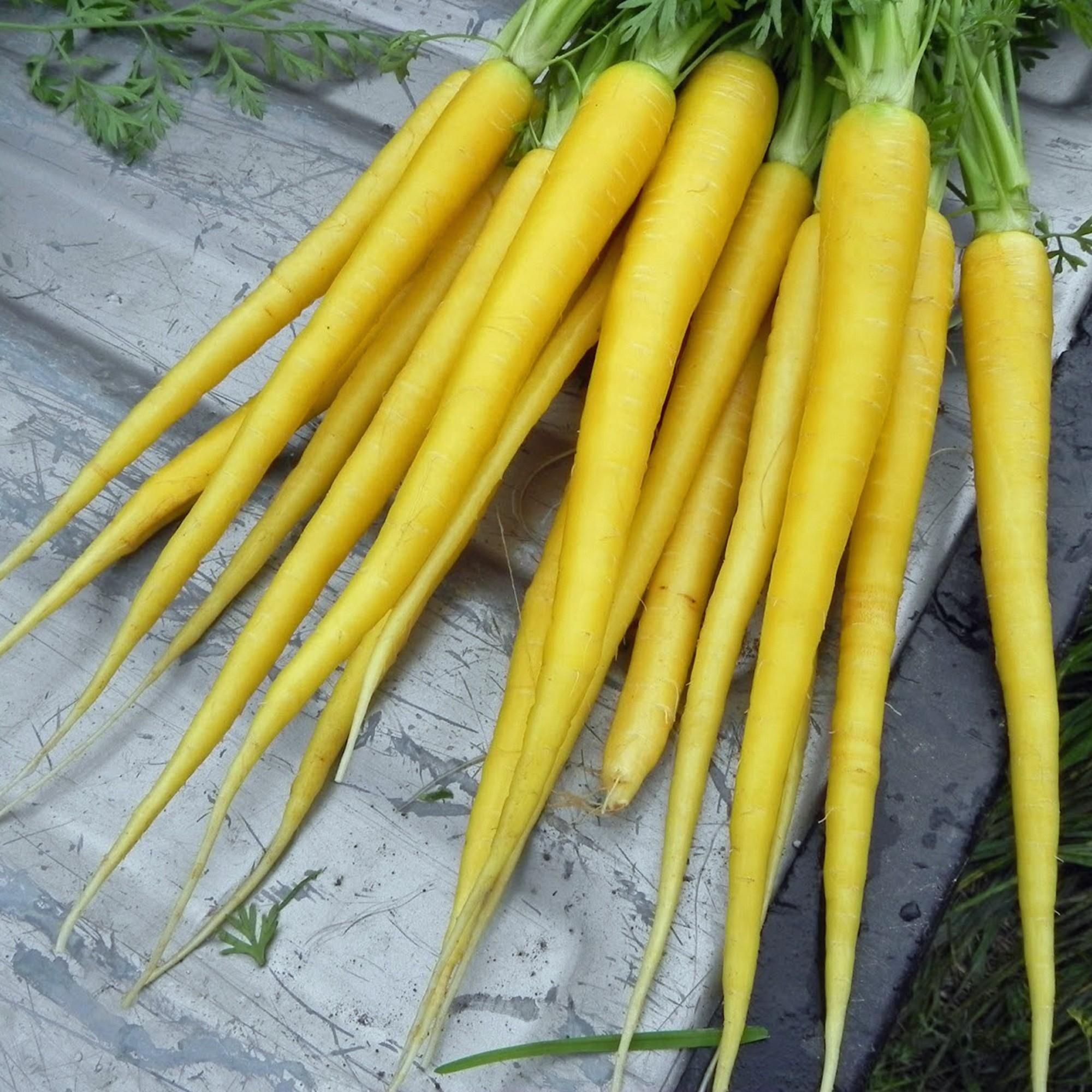 Zanahoria Amarilla Dinkos La zanahoria el poder de la transformación.para fertilidad y atración de un hombre ) acebo, artemisa, arroz, azafrán, bellota,, caña, cebada, espino, hierba. zanahoria amarilla