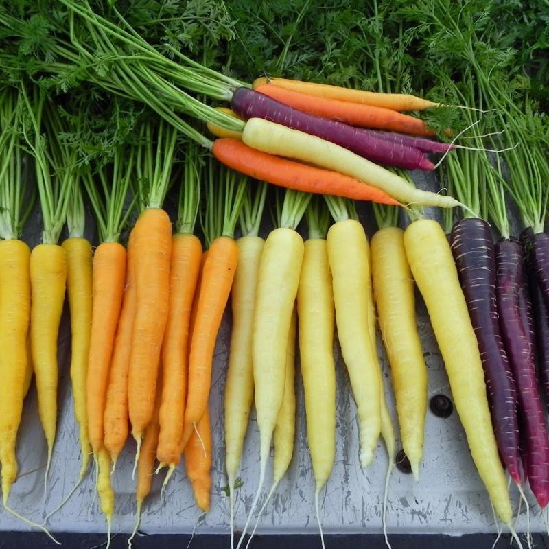 Zanahoria Mix Colores Dinkos De la zanahoria suele decirse que ayuda a broncear la piel y que es buena para la vista, pero más allá de estos efectos, la mayoría de los mortales desconoce la cantidad de beneficios que reporta al. zanahoria mix colores