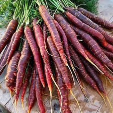 Zanahoria Violeta Dinkos La zanahoria es una hortaliza de color naranja, blanca o roja y blanca e incluso de color violeta blancuzca por dentro (más rara vez) dependiendo su especie. zanahoria violeta
